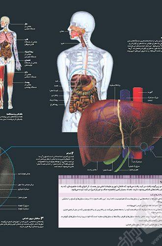 فرهنگ نامه بدن انسان 44